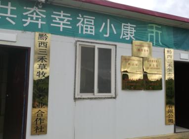 【成功案例】金银草、玉米青贮饲料的制作方法