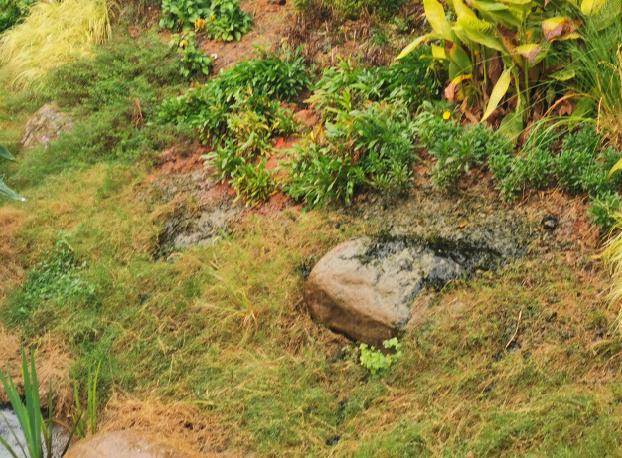 【成功案例】4000平米景观水域生物改良方案